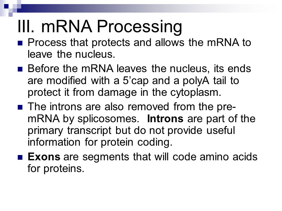 III. mRNA Processing Process that protects and allows the mRNA to leave the nucleus.