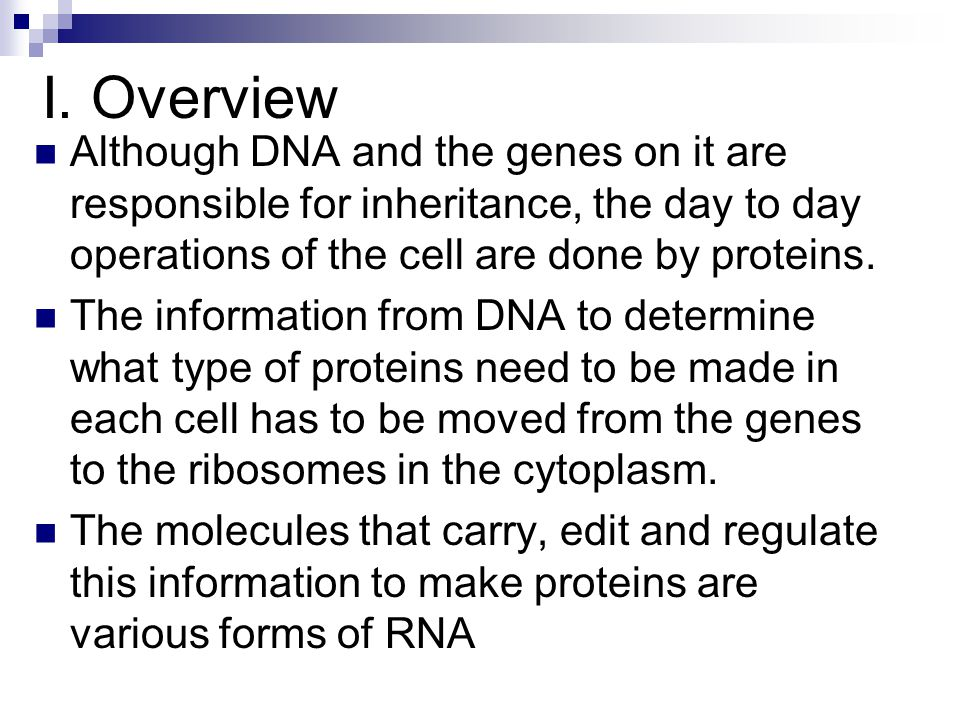 I. Overview Although DNA and the genes on it are responsible for inheritance, the day to day operations of the cell are done by proteins.