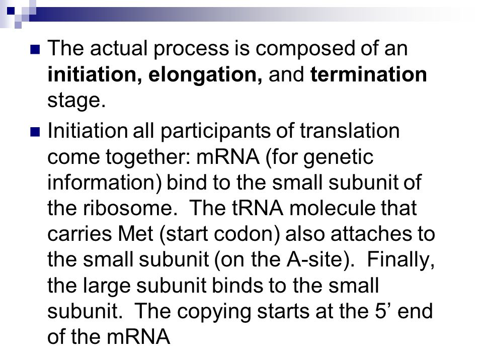 The actual process is composed of an initiation, elongation, and termination stage.
