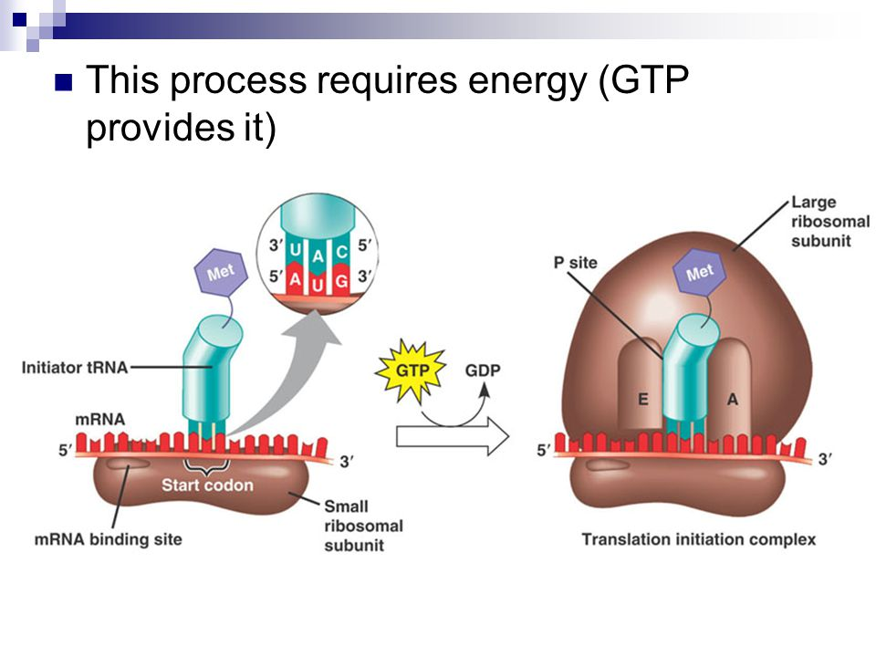 This process requires energy (GTP provides it)