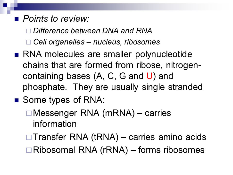Messenger RNA (mRNA) – carries information