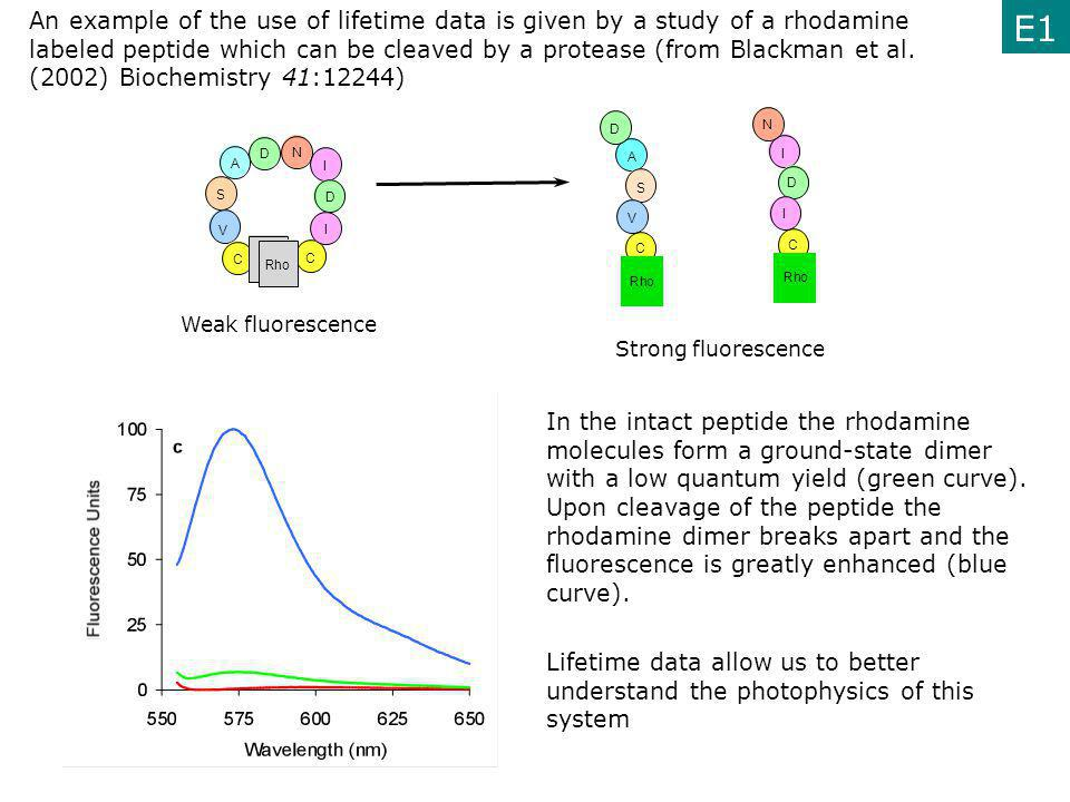 An example of the use of lifetime data is given by a study of a rhodamine labeled peptide which can be cleaved by a protease (from Blackman et al. (2002) Biochemistry 41:12244)