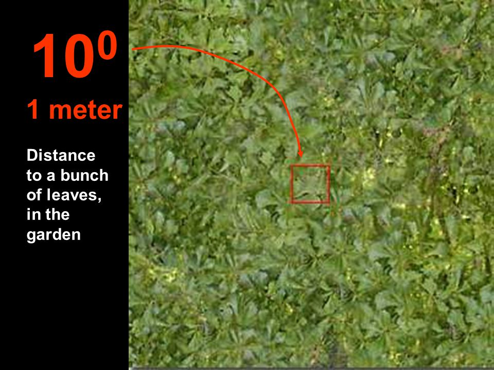 100 1 meter Distance to a bunch of leaves, in the garden