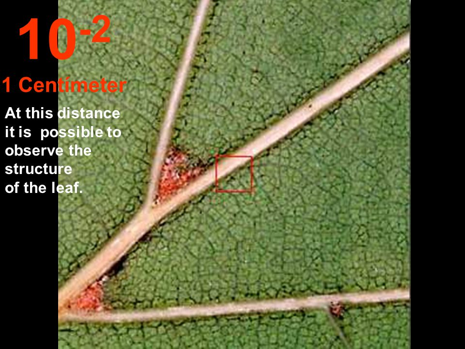 10-2 1 Centímeter At this distance it is possible to observe the structure of the leaf.