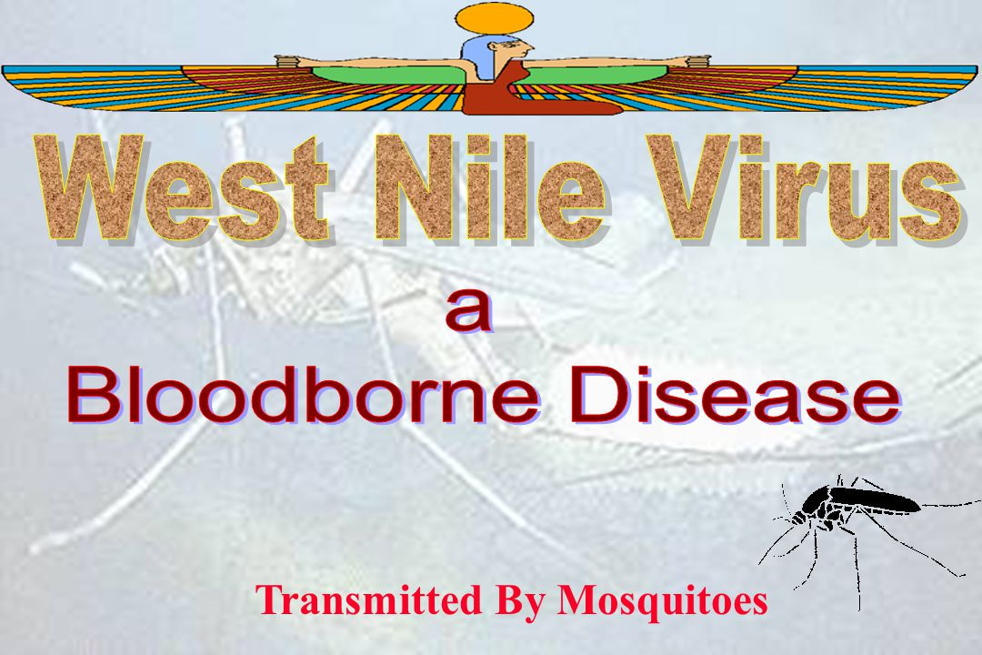 Transmitted By Mosquitoes