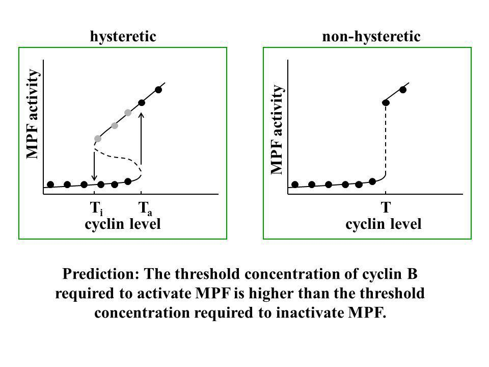 hysteretic non-hysteretic. MPF activity. MPF activity. Ti. Ta. T. cyclin level. cyclin level.