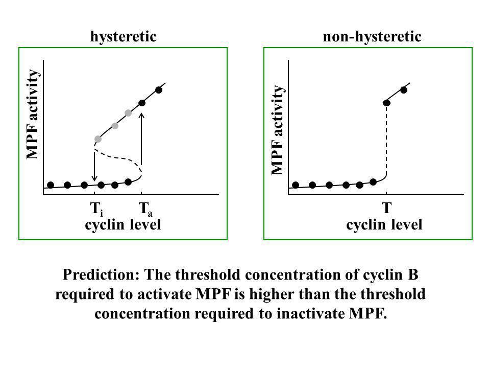 hysteretic non-hysteretic. MPF activity. MPF activity. Ti. Ta. T. cyclin level. cyclin level.