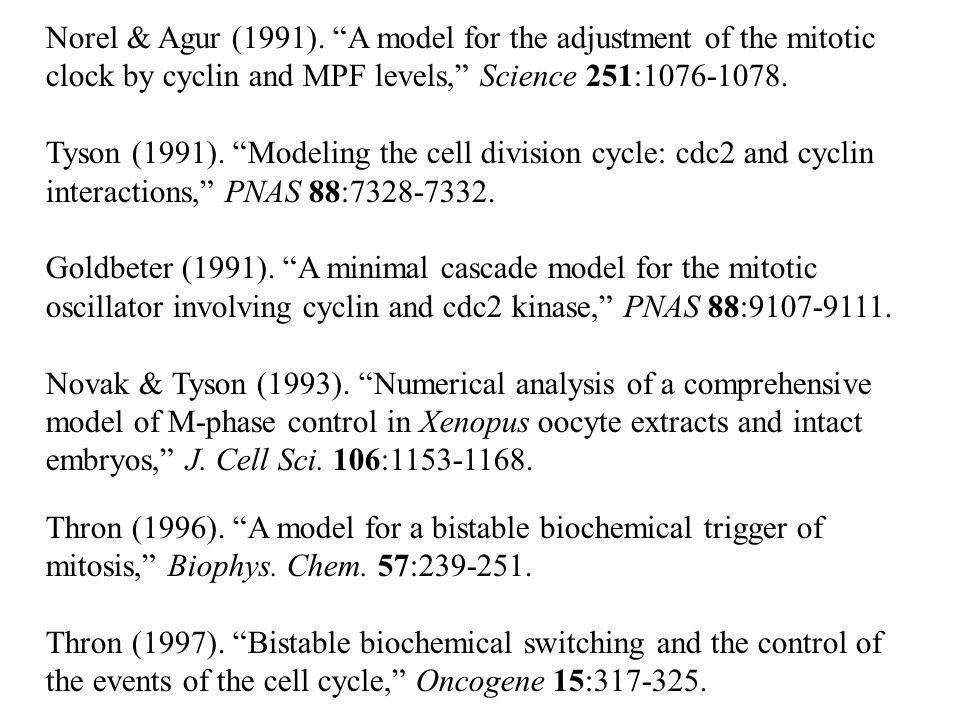 Norel & Agur (1991). A model for the adjustment of the mitotic clock by cyclin and MPF levels, Science 251:1076-1078.