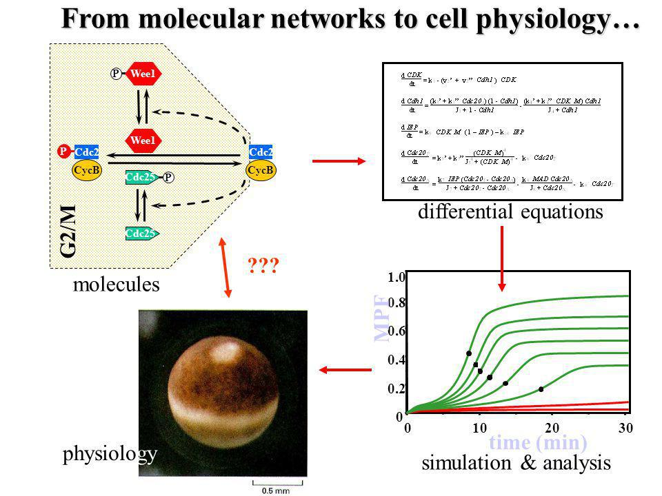 From molecular networks to cell physiology…