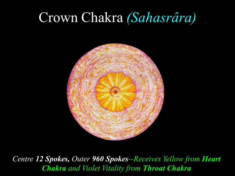 Crown Chakra (Sahasrâra)