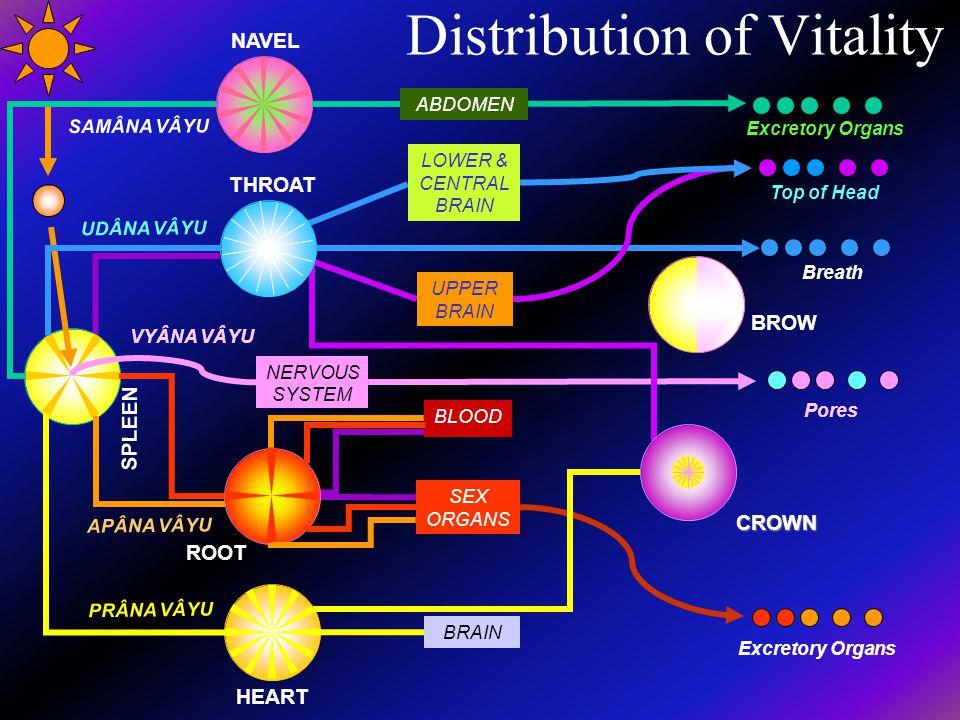 Distribution of Vitality