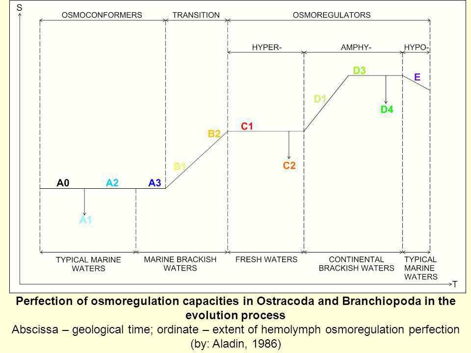 Perfection of osmoregulation capacities in Ostracoda and Branchiopoda in the evolution process Abscissa – geological time; ordinate – extent of hemolymph osmoregulation perfection (by: Aladin, 1986)