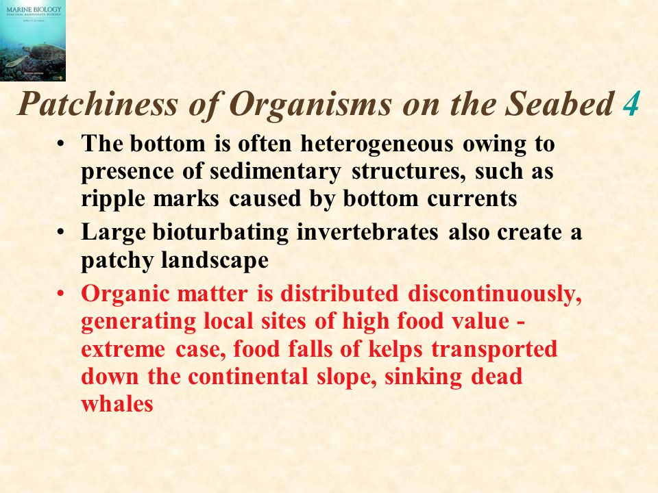 Patchiness of Organisms on the Seabed 4