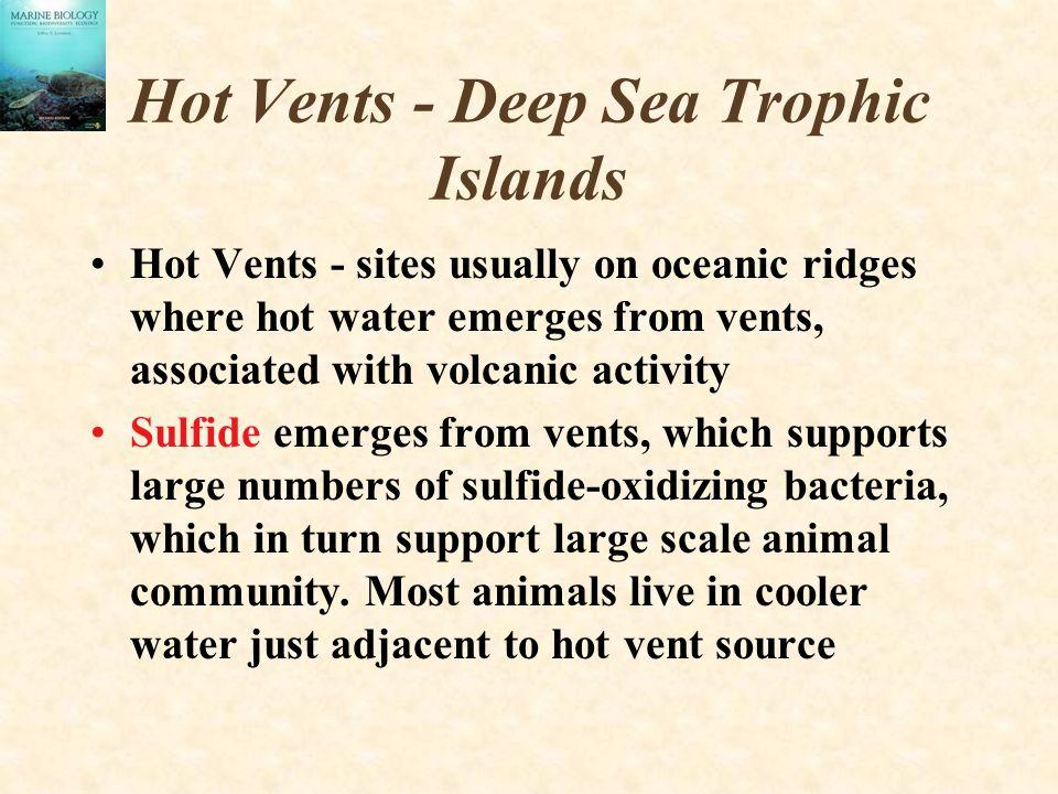 Hot Vents - Deep Sea Trophic Islands