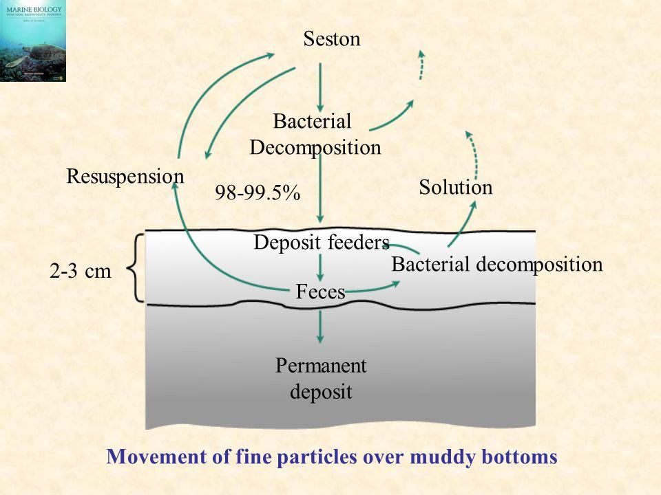 Seston Bacterial. Decomposition. Resuspension. Solution. 98-99.5% Deposit feeders. Bacterial decomposition.