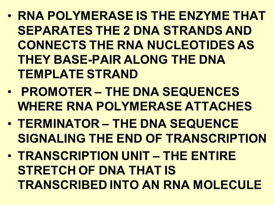 RNA POLYMERASE IS THE ENZYME THAT SEPARATES THE 2 DNA STRANDS AND CONNECTS THE RNA NUCLEOTIDES AS THEY BASE-PAIR ALONG THE DNA TEMPLATE STRAND