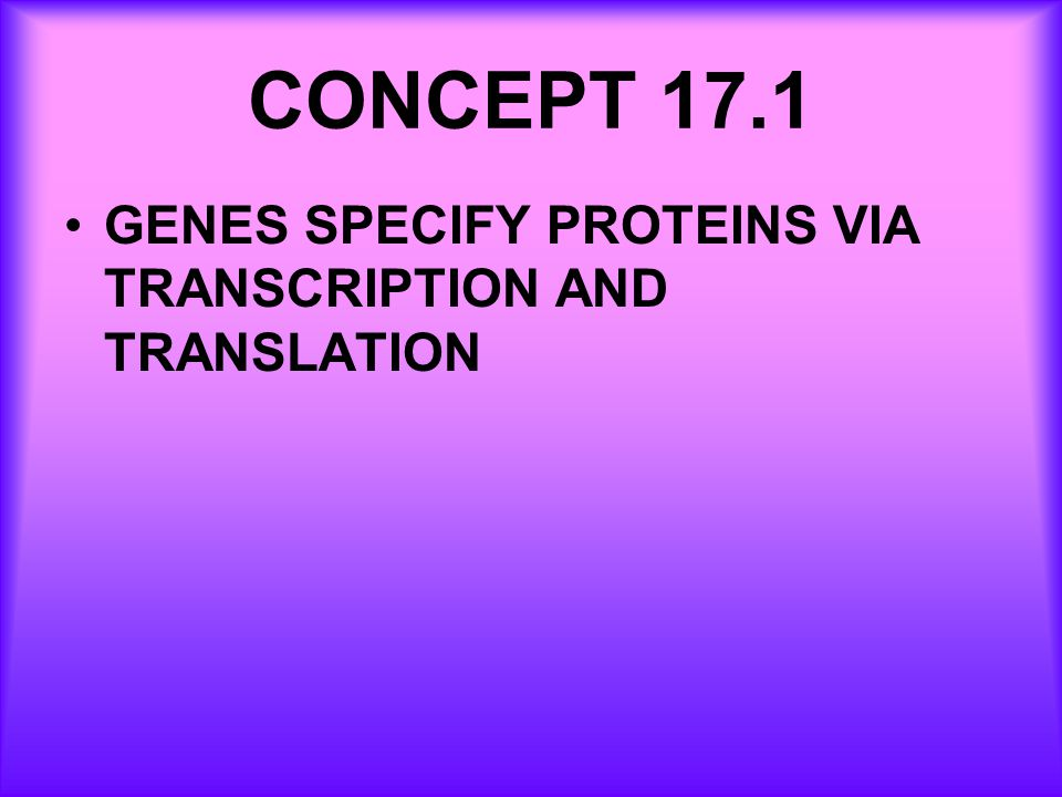 CONCEPT 17.1 GENES SPECIFY PROTEINS VIA TRANSCRIPTION AND TRANSLATION