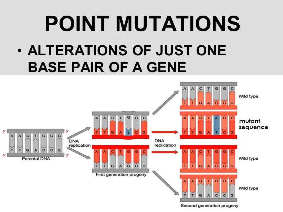POINT MUTATIONS ALTERATIONS OF JUST ONE BASE PAIR OF A GENE