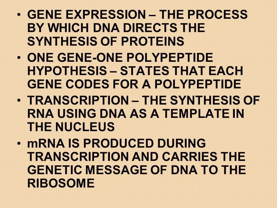 GENE EXPRESSION – THE PROCESS BY WHICH DNA DIRECTS THE SYNTHESIS OF PROTEINS