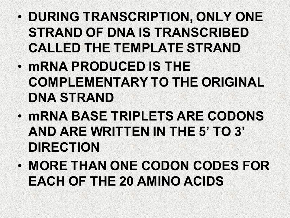 DURING TRANSCRIPTION, ONLY ONE STRAND OF DNA IS TRANSCRIBED CALLED THE TEMPLATE STRAND