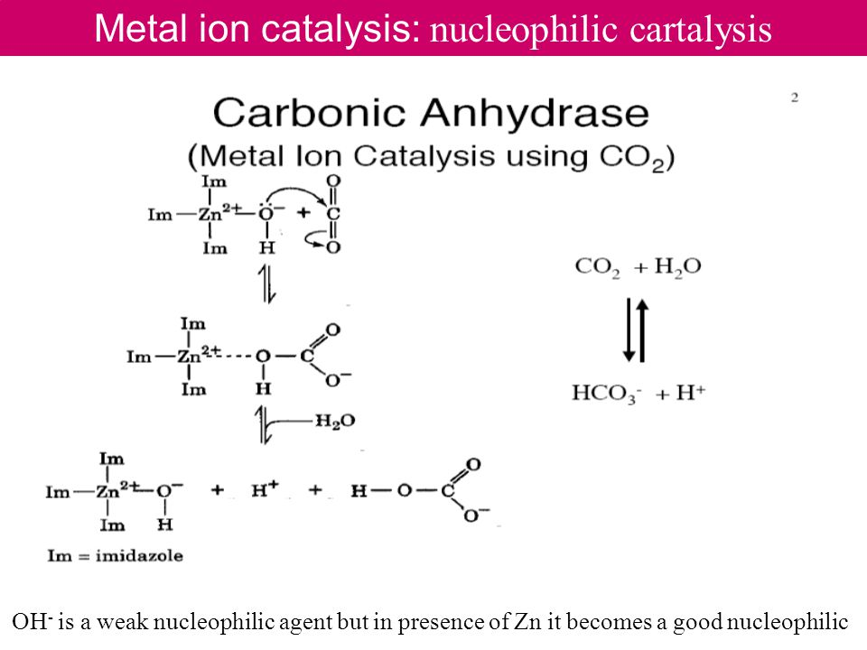 Metal ion catalysis: nucleophilic cartalysis