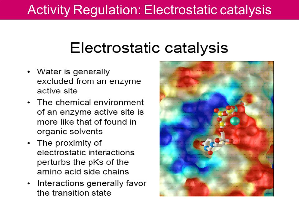Activity Regulation: Electrostatic catalysis