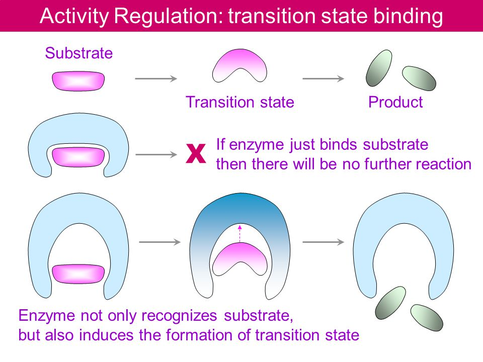 Activity Regulation: transition state binding