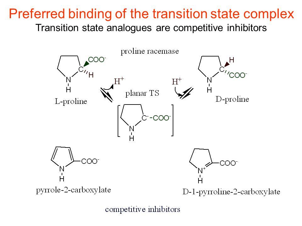 Preferred binding of the transition state complex