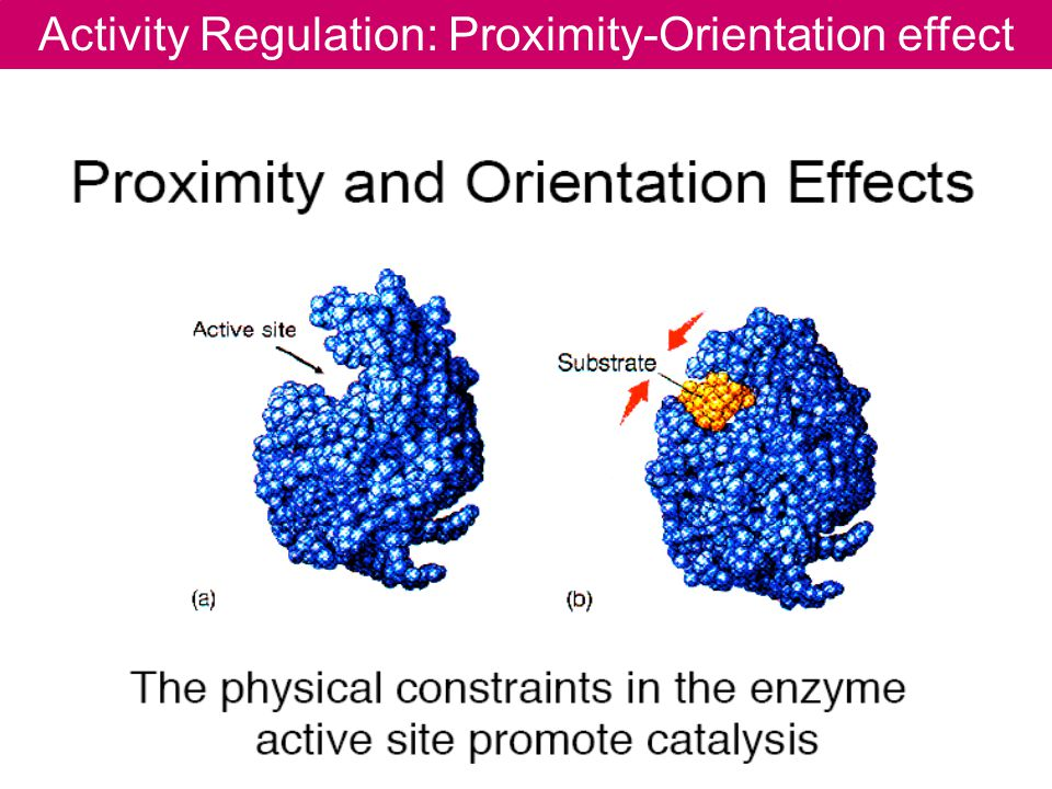Activity Regulation: Proximity-Orientation effect