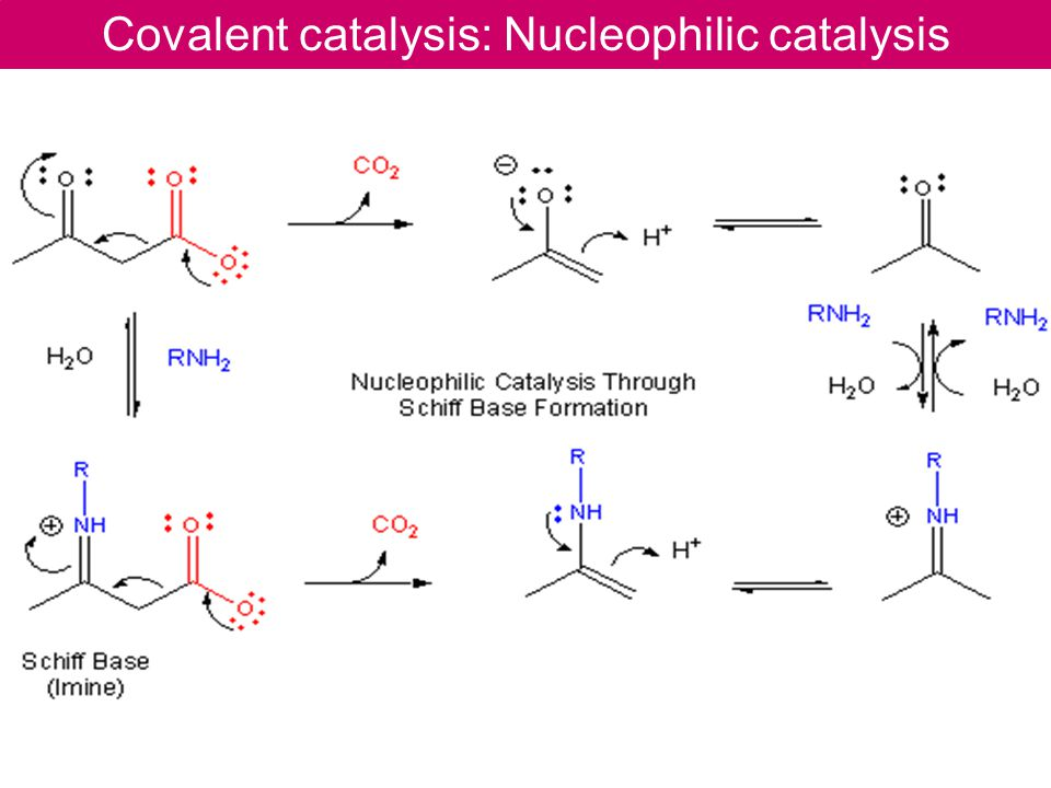 Covalent catalysis: Nucleophilic catalysis