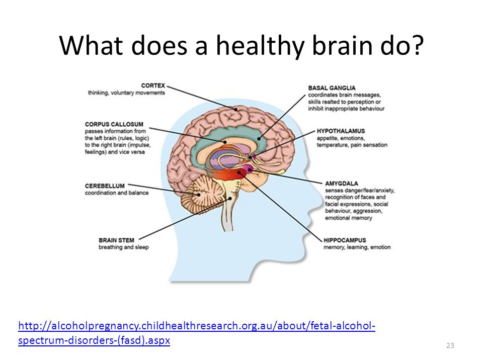 What does a healthy brain do