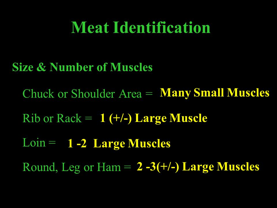 Meat Identification Size & Number of Muscles Chuck or Shoulder Area =