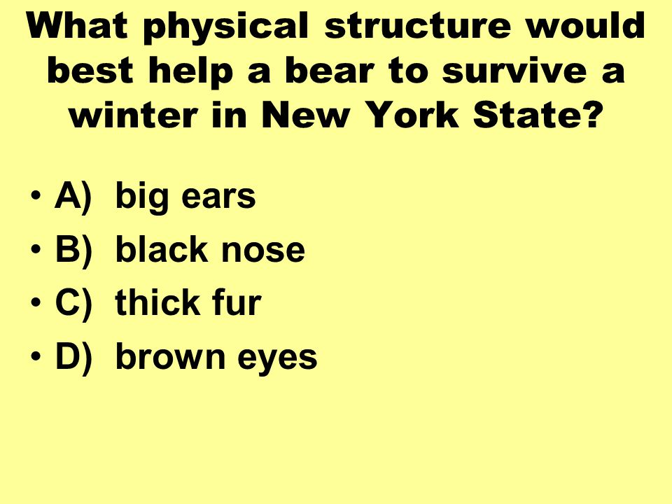 What physical structure would best help a bear to survive a winter in New York State