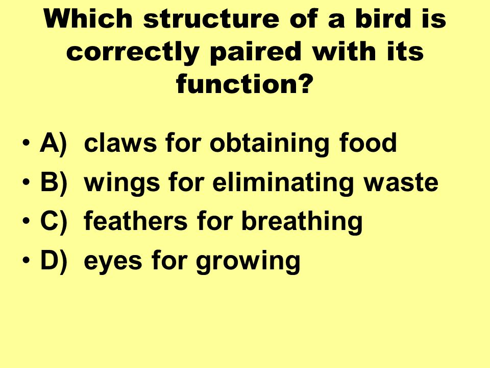 Which structure of a bird is correctly paired with its function