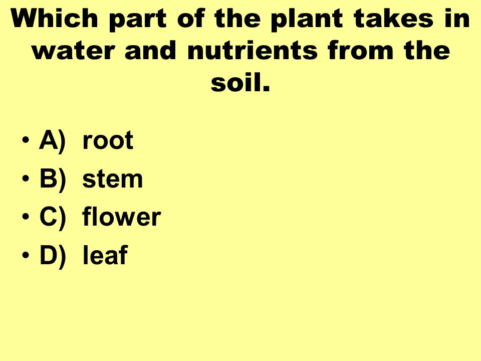 Which part of the plant takes in water and nutrients from the soil.