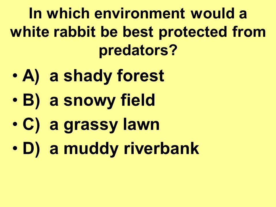 A) a shady forest B) a snowy field C) a grassy lawn