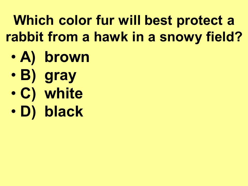A) brown B) gray C) white D) black