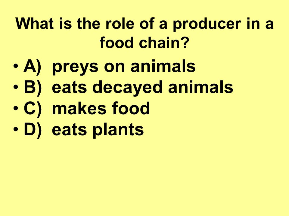 What is the role of a producer in a food chain