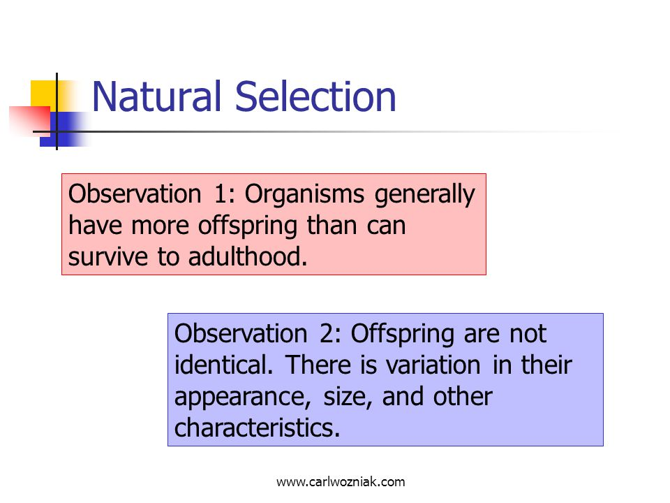Natural Selection Observation 1: Organisms generally have more offspring than can survive to adulthood.