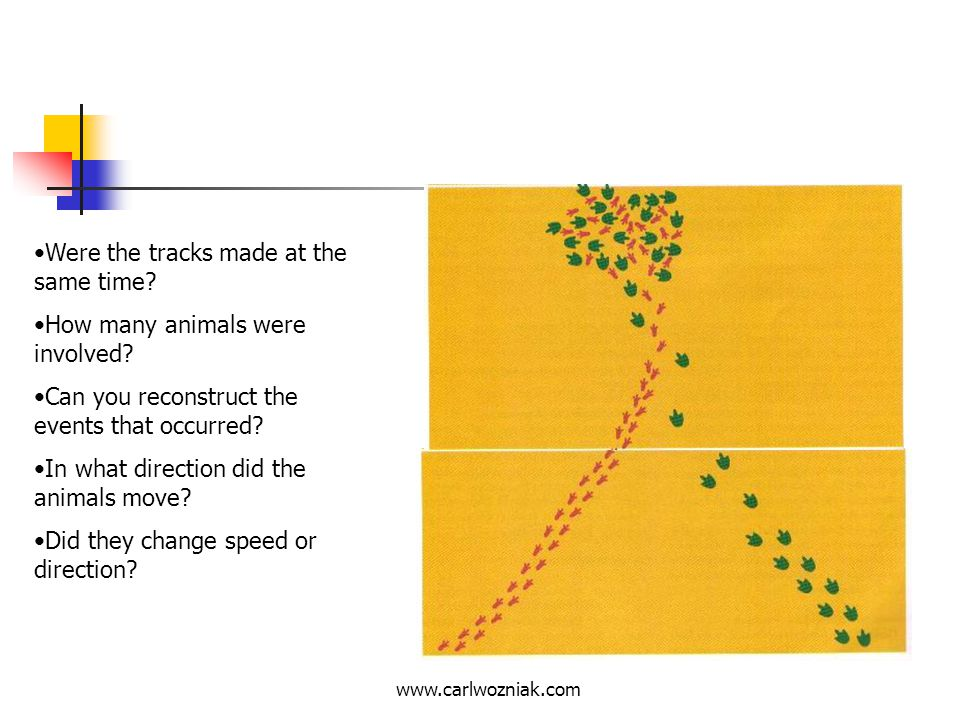 Were the tracks made at the same time How many animals were involved