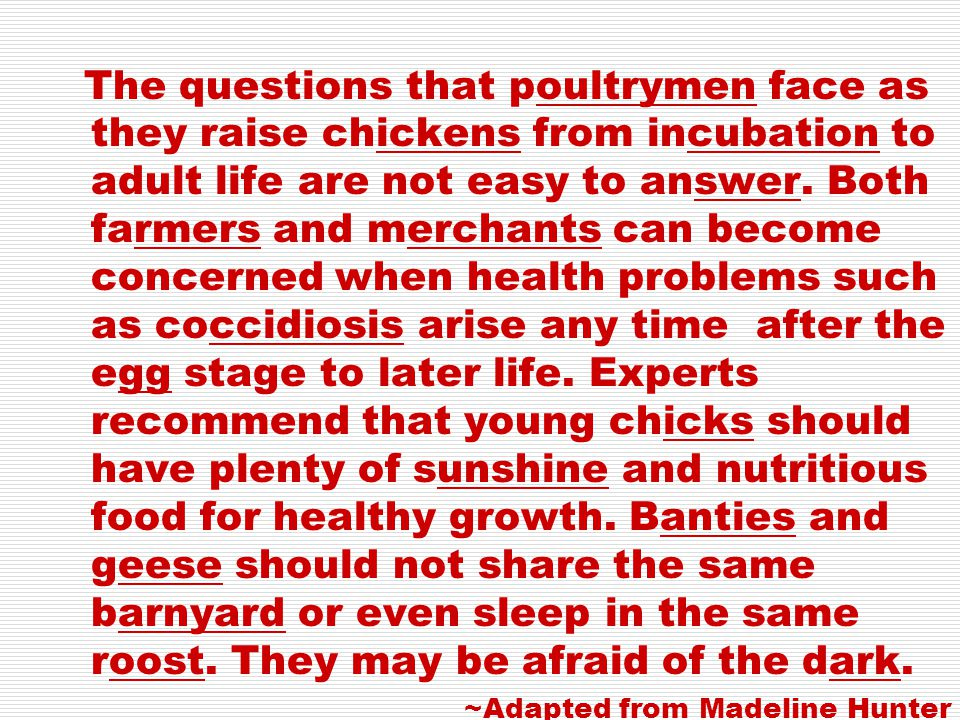 The questions that poultrymen face as they raise chickens from incubation to adult life are not easy to answer. Both farmers and merchants can become concerned when health problems such as coccidiosis arise any time after the egg stage to later life. Experts recommend that young chicks should have plenty of sunshine and nutritious food for healthy growth. Banties and geese should not share the same barnyard or even sleep in the same roost. They may be afraid of the dark.