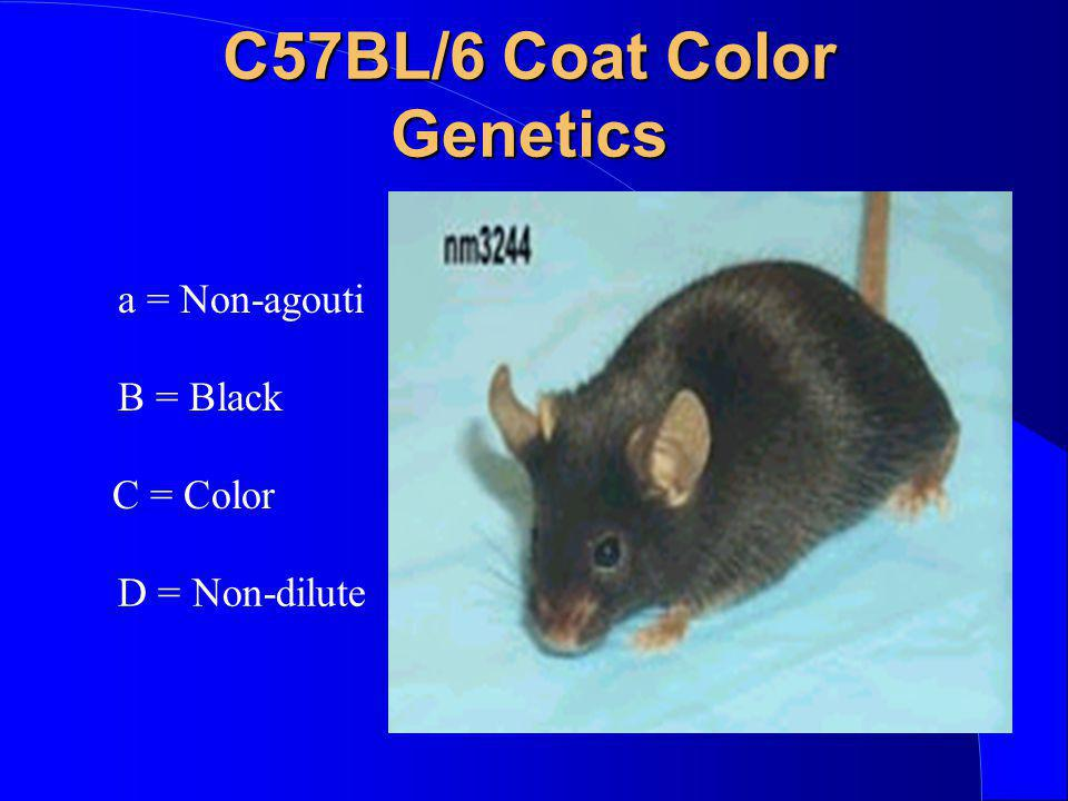 C57BL/6 Coat Color Genetics
