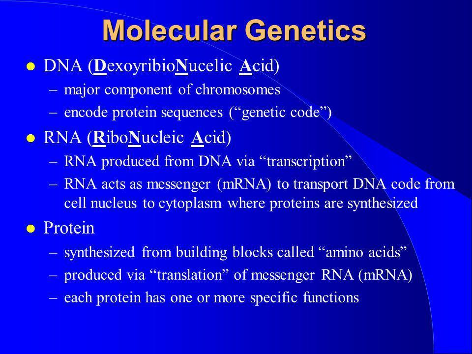Molecular Genetics DNA (DexoyribioNucelic Acid) RNA (RiboNucleic Acid)