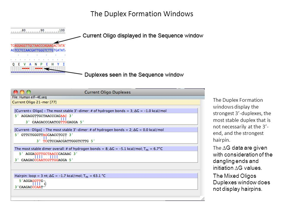 The Duplex Formation Windows