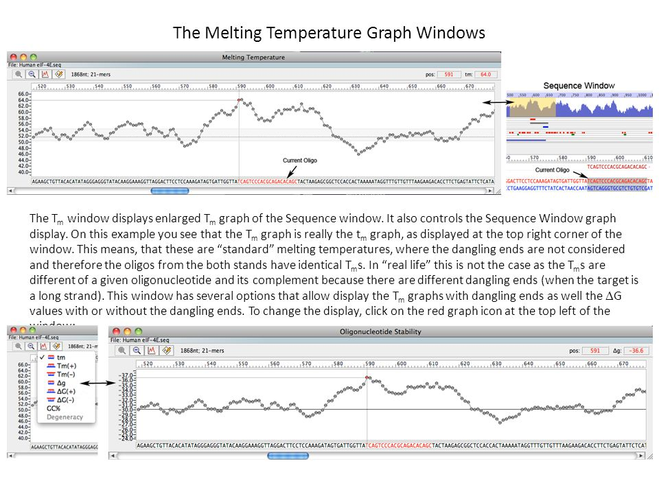 The Melting Temperature Graph Windows
