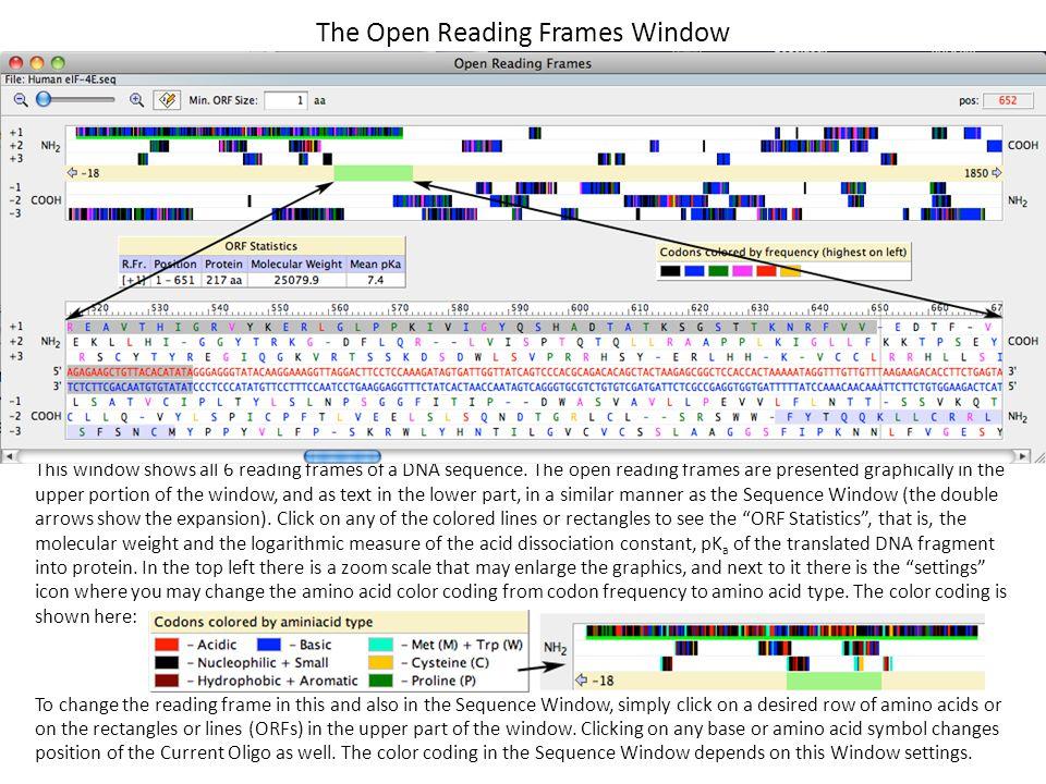 The Open Reading Frames Window