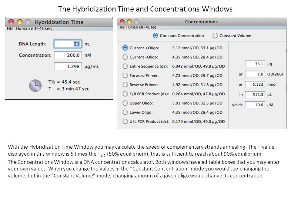 The Hybridization Time and Concentrations Windows