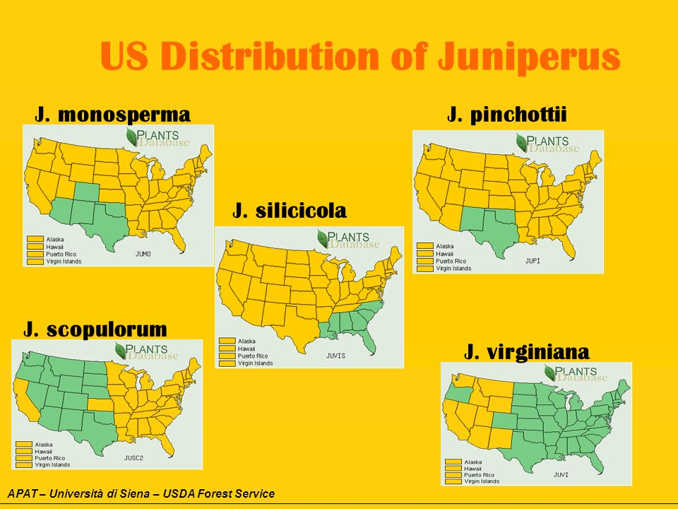 US Distribution of Juniperus