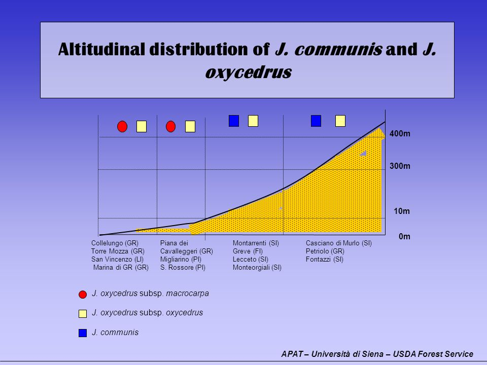 Altitudinal distribution of J. communis and J. oxycedrus