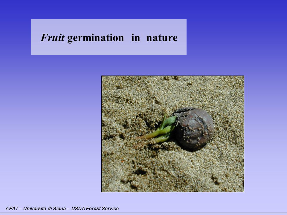 Fruit germination in nature